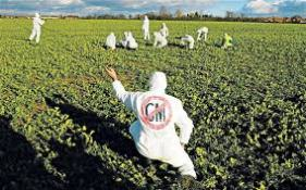 Activists against GM crops